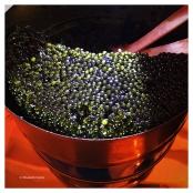 Caviar osciètre de Bulgarie.