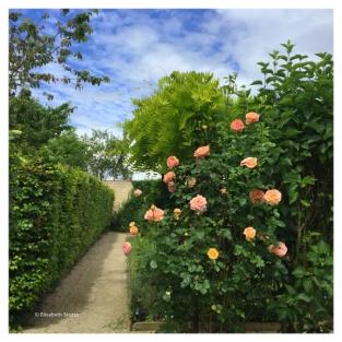 exterieur-roses