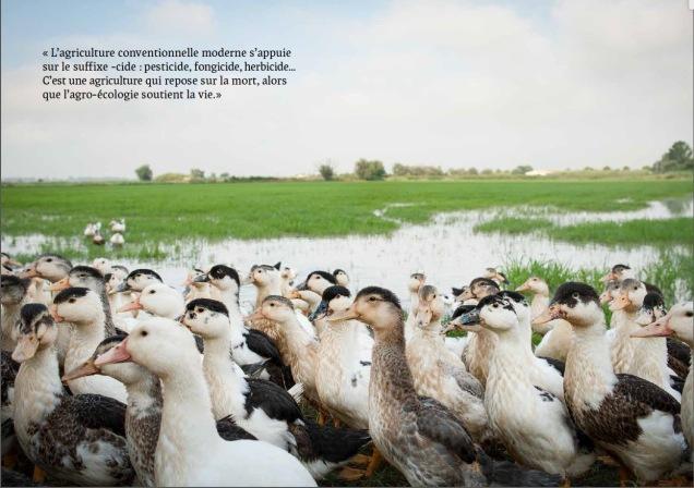 les-canards-de-bertrand-poujol