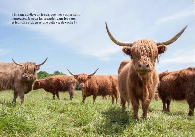 Les vaches de Grégory Delassus.jpg