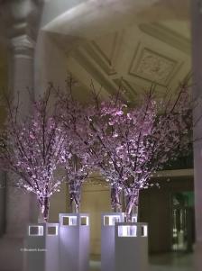 Fleurs de cerisier 1