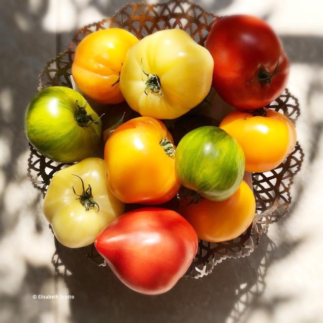 Tomates 1.jpg