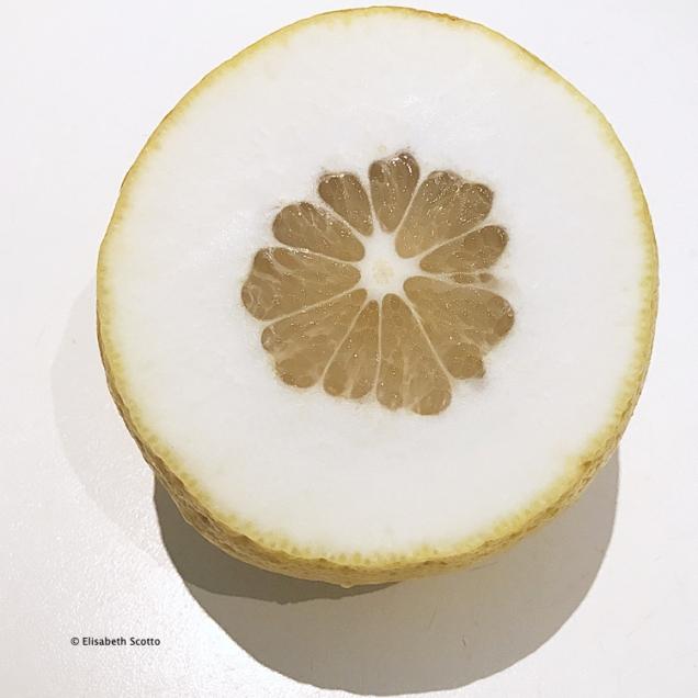 Lemoncedro2