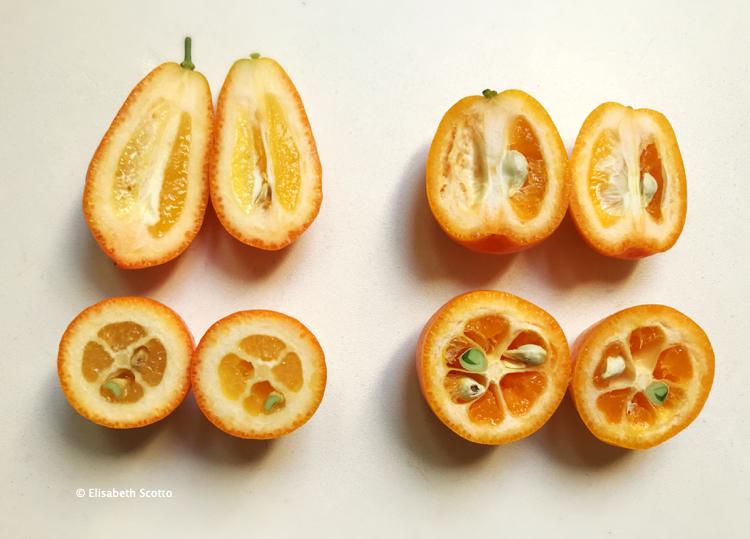 Kumquats2.jpg